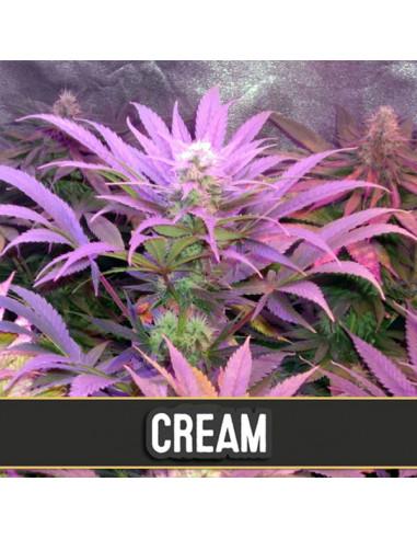 Auto Cream Fem. Blimburn Seeds