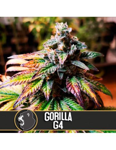 Auto Gorilla G4 Fem. Blimburn Seeds