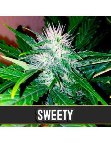 Auto Sweety Fem. Blimburn Seeds