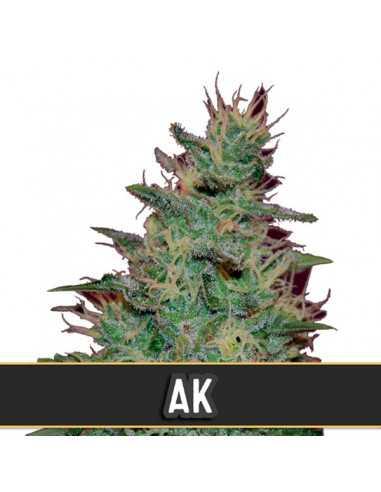 Automatic AK Fem. Blimburn Seeds