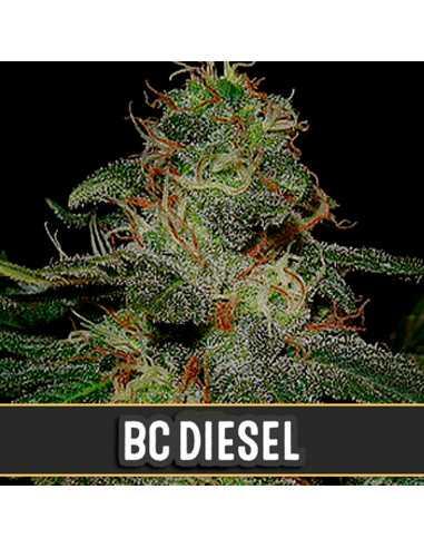 BC Diesel Fem. Blimburn Seeds