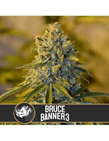 Bruce Banner Fem. Blimburn Seeds