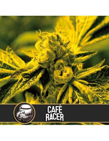 Cafe Racer Fem. Blimburn Seeds