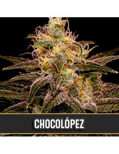 Chocolopez Fem. Blimburn Seeds