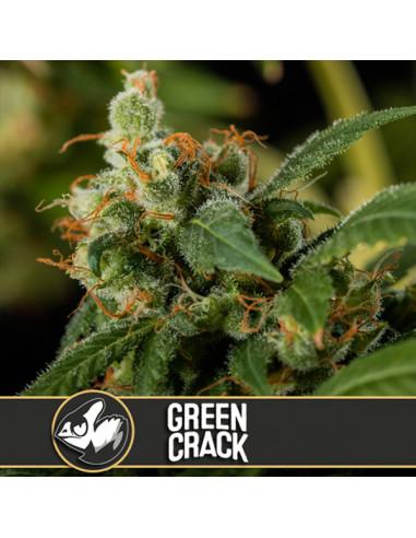 Green Crack Fem. Blimburn Seeds