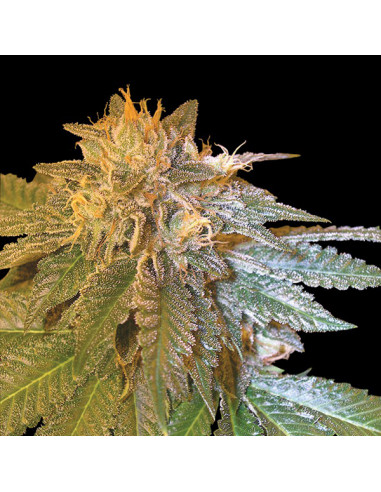 Confidential reg. CFF DNA Genetics