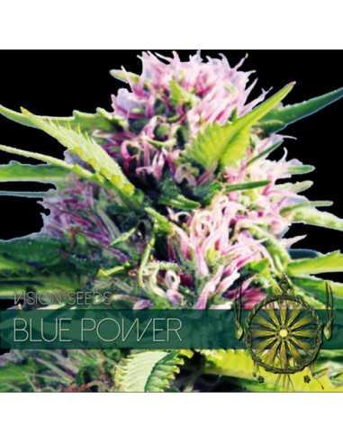 Blue Power Fem. Vision Seeds