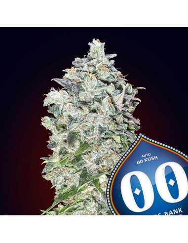 Auto 00 Kush Fem. 00 Seeds