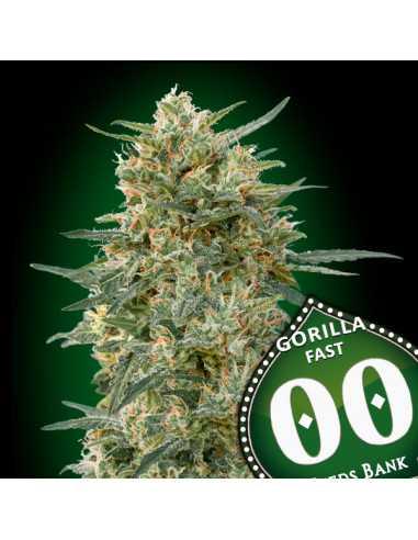Gorilla Fast Fem. 00 Seeds